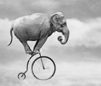 Mobilità ciclistica: l'uso della bicicletta per la sostenibilità ambientale è legge