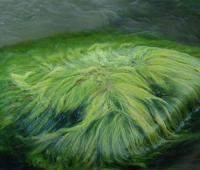 Energia dalla spremitura delle alghe per illuminare la città
