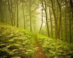 Energia dal bosco