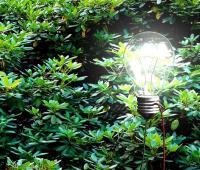 Come piante ed alberi potrebbero generare energia per delle lampade a LED