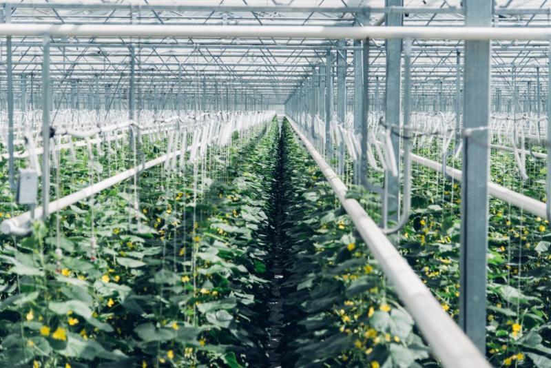 Trasformare anidride carbonica in fertilizzante ora è possibile. L'impianto operativo in Svizzera