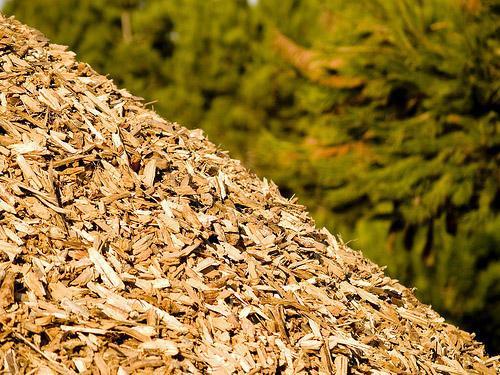 argo ambiente biomasse